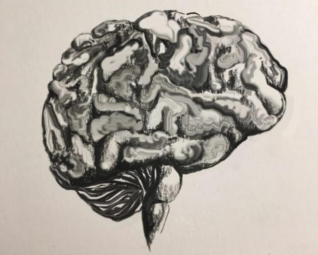Sketch of human brain.