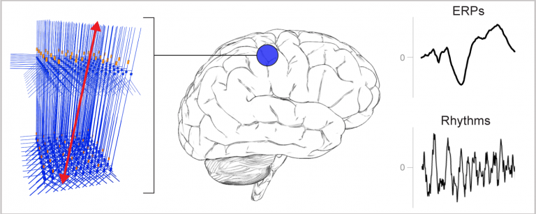 Examples of recorded neural signals.